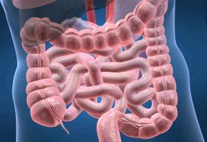 gut-healthy